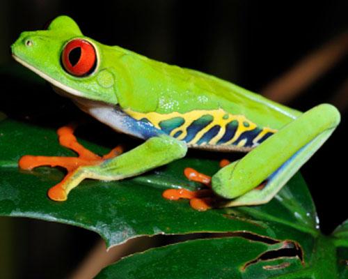 anglina.uNas.cz - angličtina online a zdarma anglická slovíčka amphibian